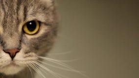 Morphing della museruola del gatto archivi video