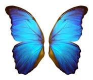 Morpho在白色背景隔绝的蝴蝶翼 向量例证