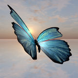 morpho πεταλούδων Στοκ Εικόνα
