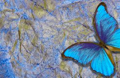 Morpho butterfly on bright shining background. gold blue texture background. golden crumpled paper. royalty free stock image