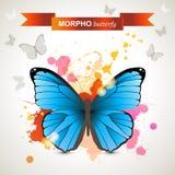 Morpho butterfly Stock Image