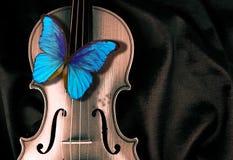 Morpho de la mariposa en un violín fotografía de archivo libre de regalías