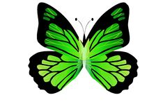 Morpho green butterfly isolated on white background. Illustration design