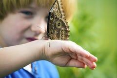 Morpho motyl na ręce Zdjęcie Stock