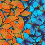 Morpho tekstury motyli tło błękitny i pomarańczowy naturalny abstrakcjonistyczny tło motyl uskrzydla w locie obraz royalty free