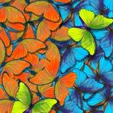 Morpho tekstury motyli t?o Kolorowy Naturalny Abstrakcjonistyczny t?o motyl uskrzydla w locie obrazy stock