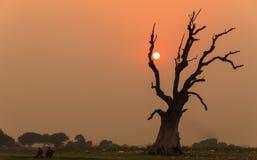 Morre a árvore Fotos de Stock