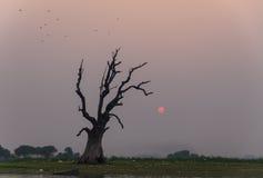Morre a árvore Imagens de Stock Royalty Free