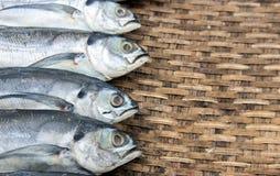 Morrem os peixes na cesta Imagem de Stock