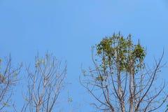 Morrem quase as árvores Fotos de Stock