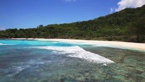Morreu a árvore no Sandy Beach em Seychelles video estoque