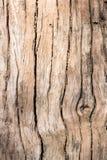 Morreu a madeira Foto de Stock Royalty Free