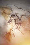 Morreu o pássaro no fóssil de pedra Fotos de Stock