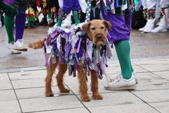 Morris dancers dog, Hastings Stock Photo