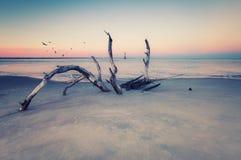 Morris Island Lighthouse bij zonsondergang stock afbeeldingen