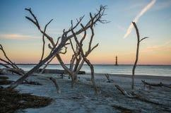 Morris Island Lighthouse i avståndet som inramas av kala träd på solnedgången arkivfoton