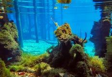 Morrisson fjädrar undervattens- sceniskt Arkivfoton