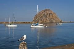 Morro Bay Rock and yahts landscape. Morro Rock and yahts with seagull. Morro Bay near San Luis Obispo, CA. USA Stock Photos