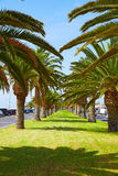 Morro Jable Fuerteventura Matorral palm trees Royalty Free Stock Image