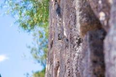 Morro Jable promenade and chipmunks Stock Image