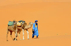 Morrocan Desert 4. Camels in the dunes of the Morrocan desert near the village of Merzouga Stock Photo