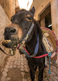 Morrocan mule Royalty Free Stock Photos