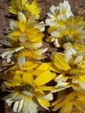 Morrocco natur royaltyfri fotografi