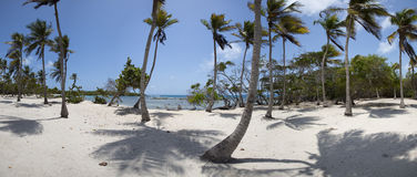 Morrocoy National park, a paradise with coconut trees, white san Stock Photos