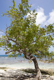 Morrocoy National park, a paradise with coconut trees, white san Royalty Free Stock Photography