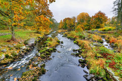 Morrum river cascades in autumn color Royalty Free Stock Images