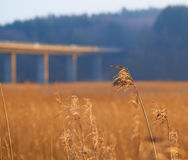 Morsø bro Royaltyfria Bilder