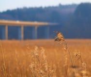 Morsø bro Royalty Free Stock Images