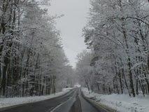 Morsa del carnaval del Año Nuevo de los días de fiesta del clima de la estación de la nieve del invierno Foto de archivo