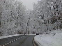 Morsa del carnaval del Año Nuevo de los días de fiesta del clima de la estación de la nieve del invierno Imagenes de archivo
