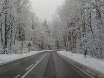 Morsa del carnaval del Año Nuevo de los días de fiesta del clima de la estación de la nieve del invierno Fotos de archivo libres de regalías