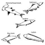 Morscy mieszkanowie z imionami Ołówkowy nakreślenie ręką Obrazy Stock