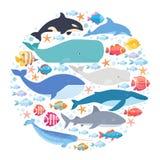 Morscy ssaki i ryba ustawiający w okręgu Narwhal, błękitny wieloryb, delfin, bieługa wieloryb, humpback wieloryb, bowhead i sperm ilustracja wektor