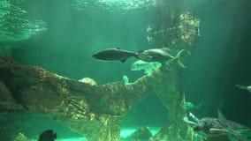 Morscy zwierzęta I Denny życie zbiory wideo