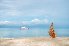 Morska brown koncha shelfish na białego piaska tropikalnej plaży z turquise morza tłem Zdjęcie Stock