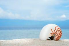 Morska koncha shelfish łodzik na białego piaska tropikalnej plaży z turquise morza tłem Obrazy Royalty Free