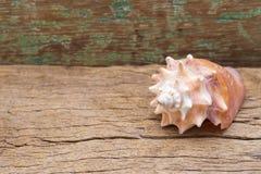 Morska konchy skorupa na stole Obraz Stock