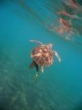 Morski żółw Zdjęcia Royalty Free