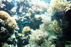 Morski życie Obraz Stock