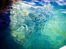 Morski życie Obraz Royalty Free