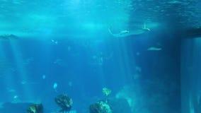 Morski życie w oceanarium Lisbon, Portugalia zbiory wideo