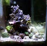 Morski akwarium Obraz Royalty Free