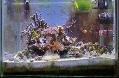Morski akwarium Obraz Stock