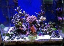 Morski akwarium Zdjęcie Royalty Free