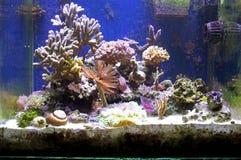 Morski akwarium Obrazy Royalty Free