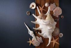 Morski skład. Obrazy Royalty Free